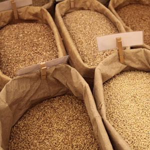 Grain_services