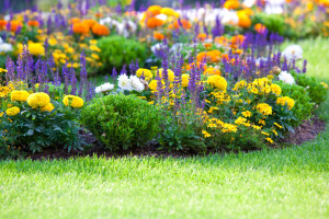 multicolored flowerbed on a lawn. horizontal shot. small GRIP
